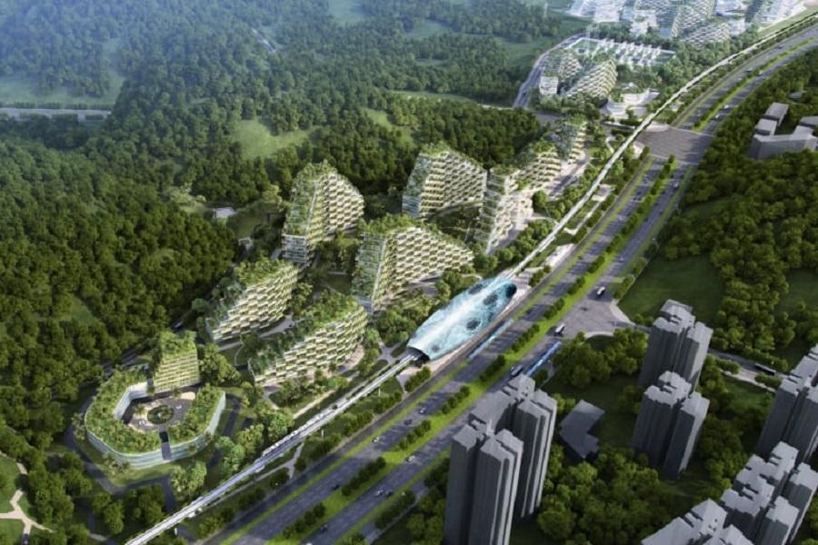 «جنگل شهر» ایده چینی ها برای بهبود فضای سبز