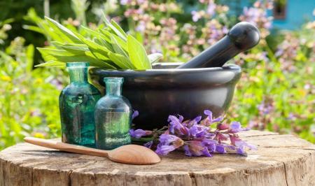 این 10 گیاه شفابخش را امتحان کنید