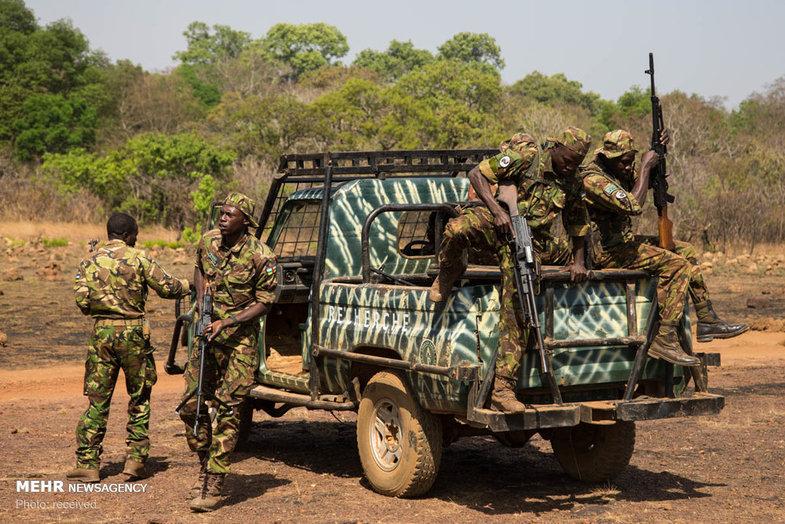مقابله با شکارچیان غیرقانونی در آفریقای مرکزی + عکس