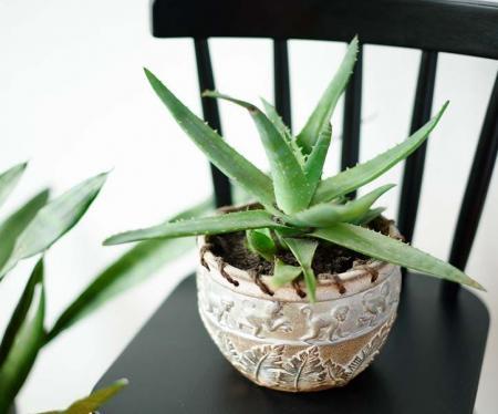 7 گیاه آپارتمانی برای درمان استرس+عکس