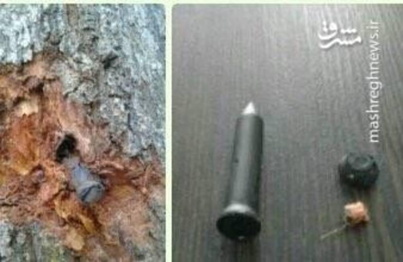 واقعیت ماجرای نصب تجهیزات شنود روی درختان چیست؟ + عکس
