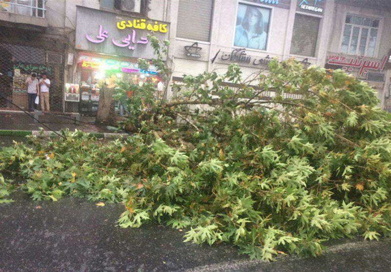 شکسته شدن درختان در طوفان دیروز + عکس