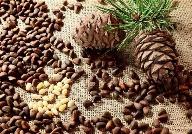 خواص حیرت انگیز میوه و دانه درخت کاج