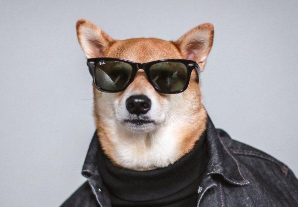 با خوش استایل ترین سگ دنیا آشنا شوید+ عکس