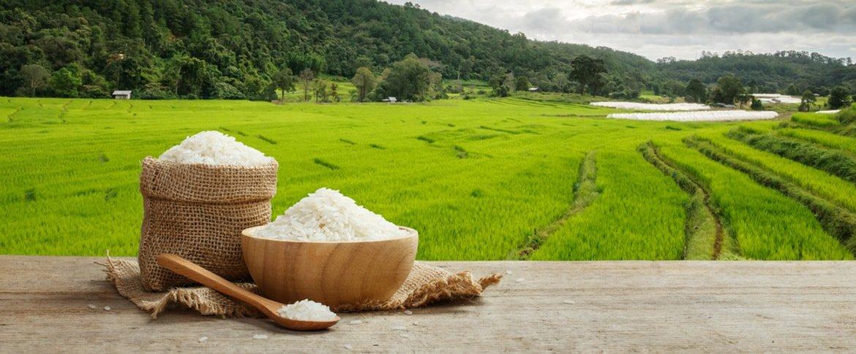 مراقب مسمومیت برنج باشید
