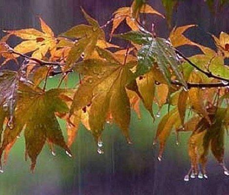 کاهش دمای تهران و بارش باران در شمال، مرکز و غرب کشور