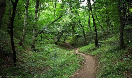 دستدرازی به جنگلهای هیرکانی