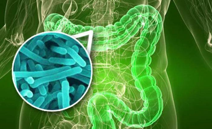 نقش باکتریهای روده در خطر ابتلا به اماس