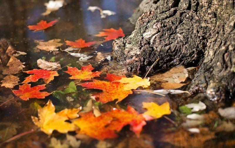 خطرات پاییز برای سلامتی