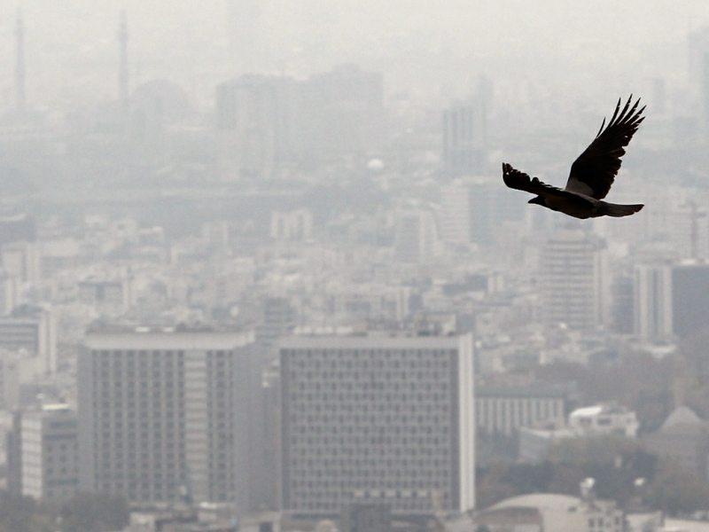 مضرات خطرناك آلودگي هوا بر سلامتي انسان/ راه هاي كاهش مضرات