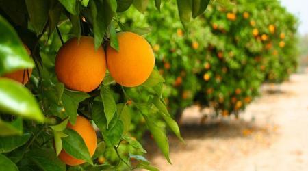 عطر پرتقال، بوی نارنگی، خداحافظ بیماری