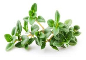با این ضدمیگرن گیاهی آشنا شوید