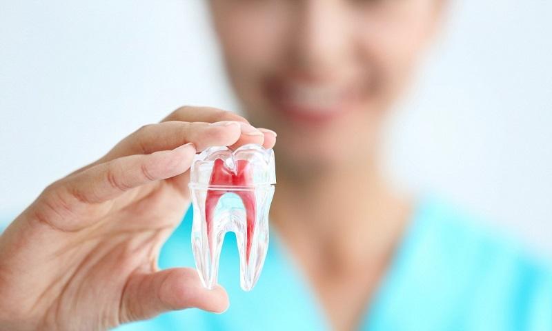 دفترچه راهنما برای حفظ جان دندانهایتان