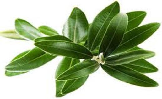 قویترین سلاحهای گیاهی برای مبارزه با فشارخون
