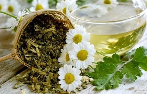 تأثیر معجزهآسای این گیاه در درمان سرماخوردگی
