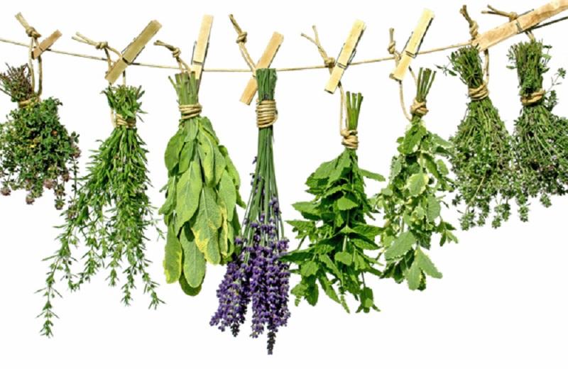 خواص سبزیجات معطر از ترخون تا شوید