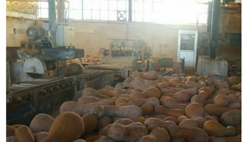 کارخانه ای که کدوخانه شد! + عکس