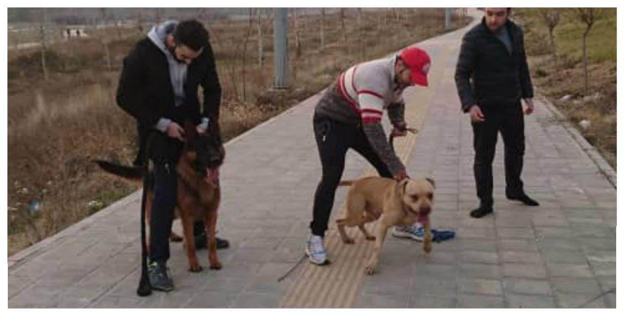 حمله وحشیانه سگ ها به کودکی در پارک لواسان + عکس