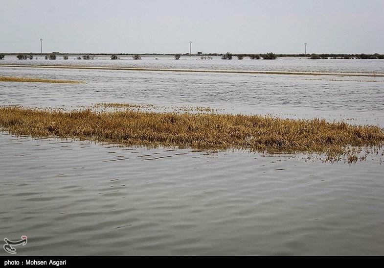 حال و روز گلستان یک ماه پس از سیلاب + عکس
