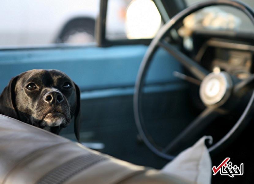 سرقت خودرو در فلوریدا توسط یک سگ بازیگوش + عکس