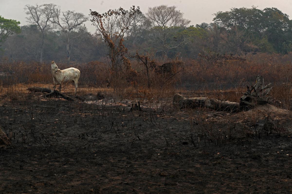 988651a680cf48efadc8517a74c66d05 8 - سوختن حیوانات در آتش سوزی بزرگترین تالاب جهان + عکس