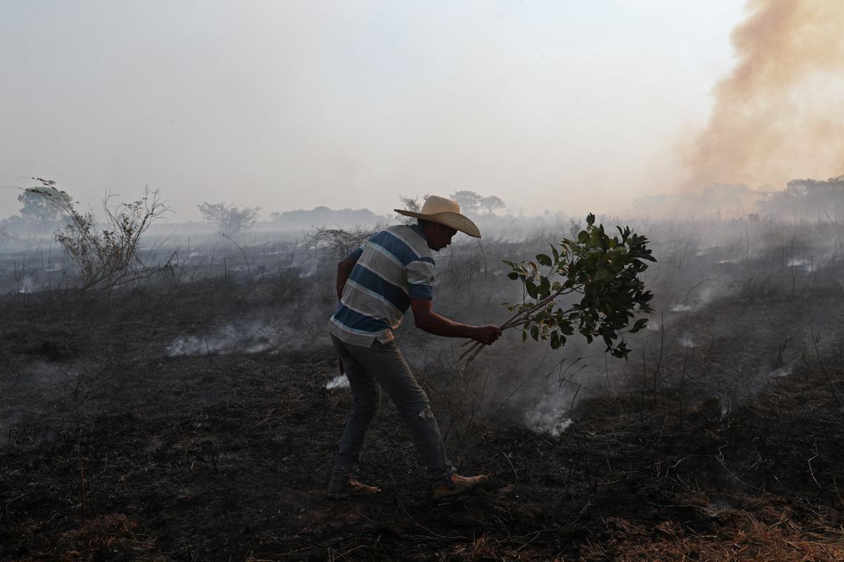 9f149029815440d49cc57f1452ed7b9b 8 - سوختن حیوانات در آتش سوزی بزرگترین تالاب جهان + عکس