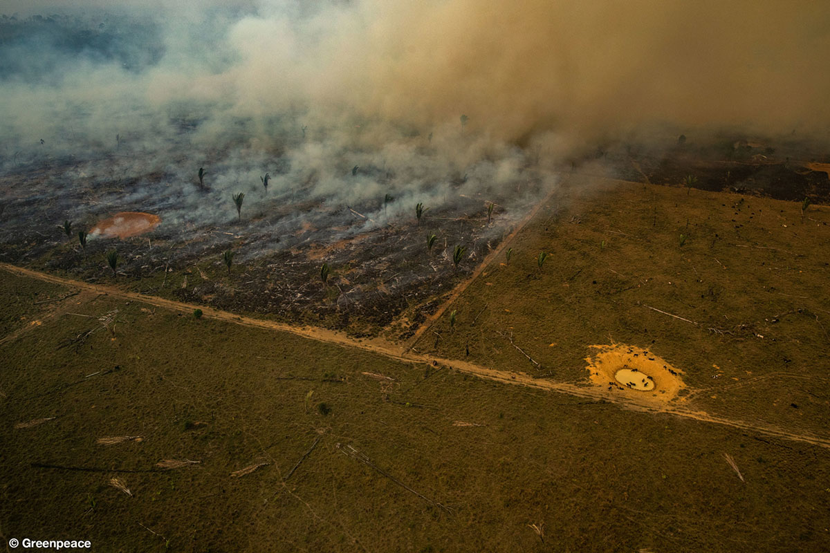 GP0STTSE0 greenpeace amazon fires 2019x - سوختن حیوانات در آتش سوزی بزرگترین تالاب جهان + عکس
