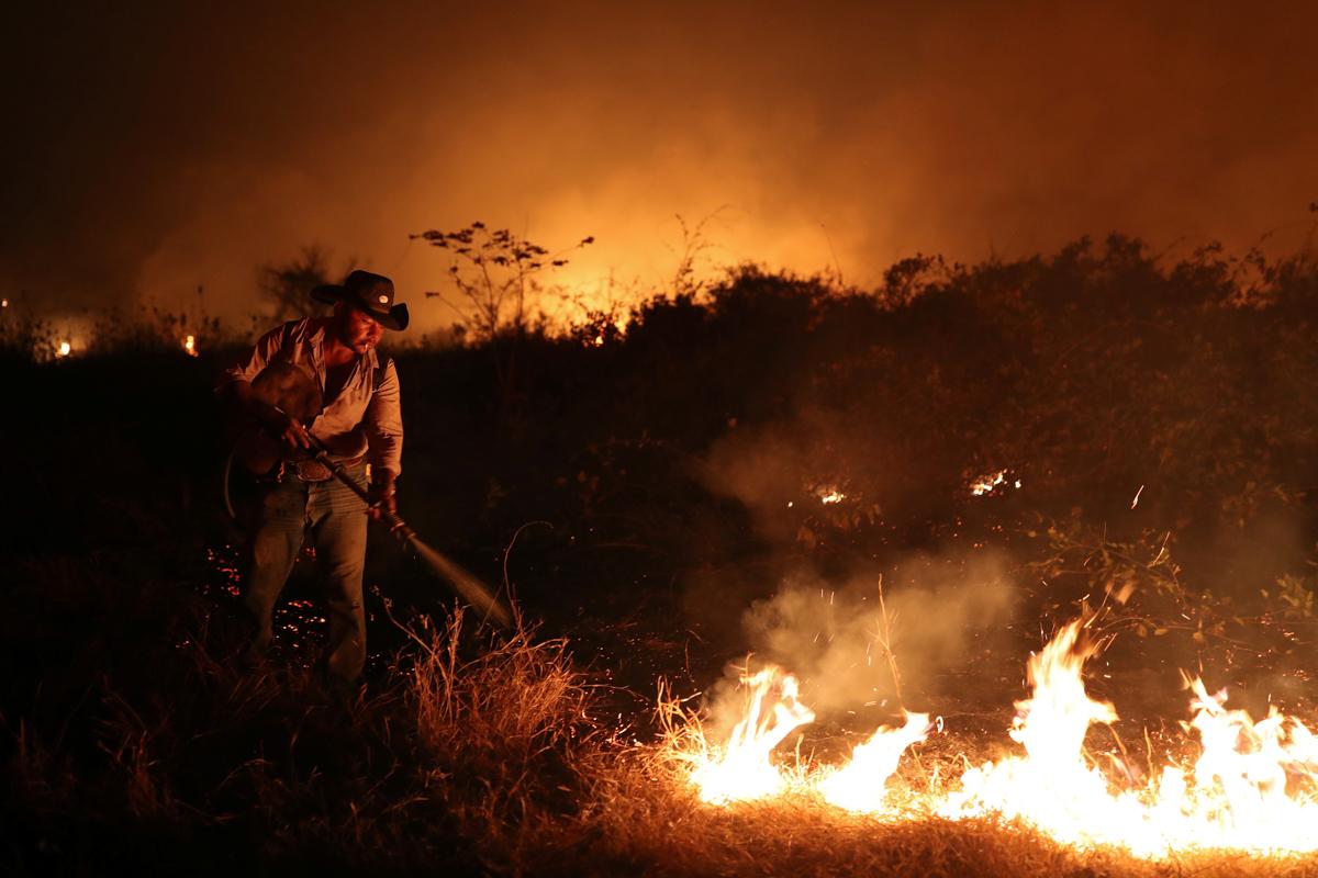 a8b4f588dfe74db886e02b83a2a7c656 8 - سوختن حیوانات در آتش سوزی بزرگترین تالاب جهان + عکس