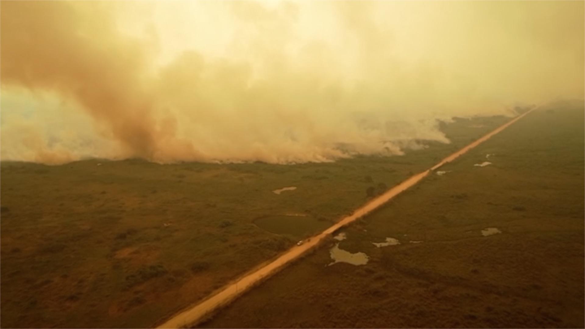 ad813c5b43b64fc5bf2b2c5d9973c4ad - سوختن حیوانات در آتش سوزی بزرگترین تالاب جهان + عکس