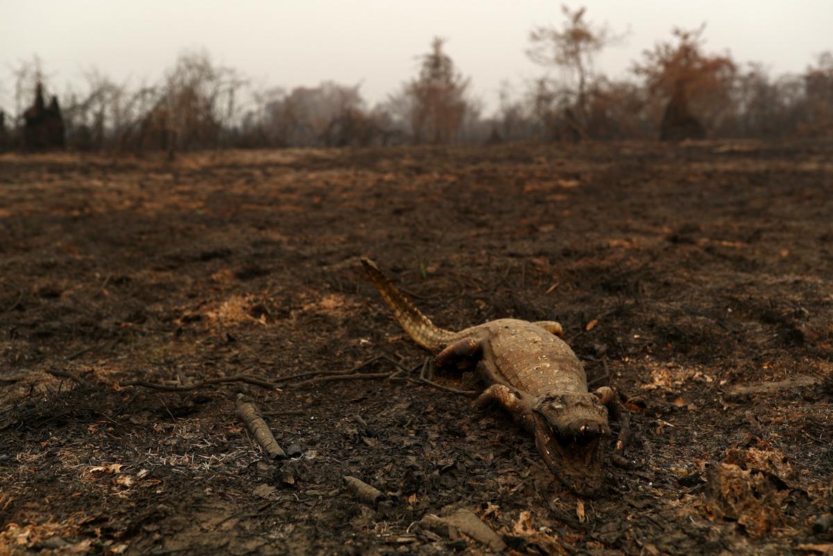 e766c108cd6c4179877d00ee6946df1b 8 - سوختن حیوانات در آتش سوزی بزرگترین تالاب جهان + عکس