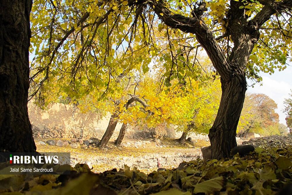 74439885 - پاییز خیره کننده در باغ های تبریز+عکس