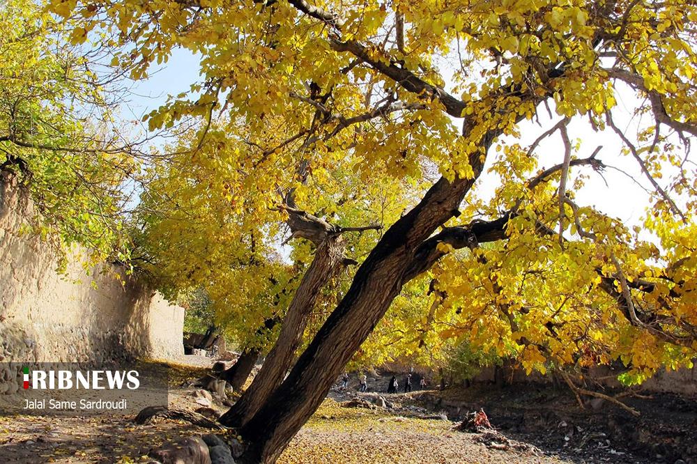 748329848495 - پاییز خیره کننده در باغ های تبریز+عکس