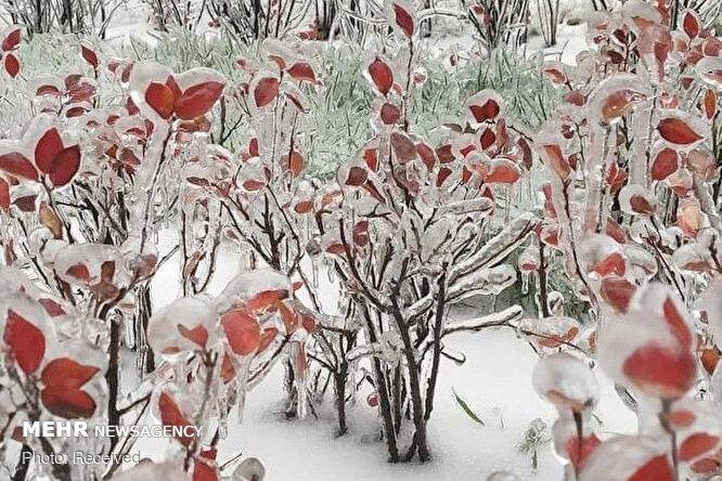 379487856 - یخ زدگی سراسری در شرق روسیه+عکس