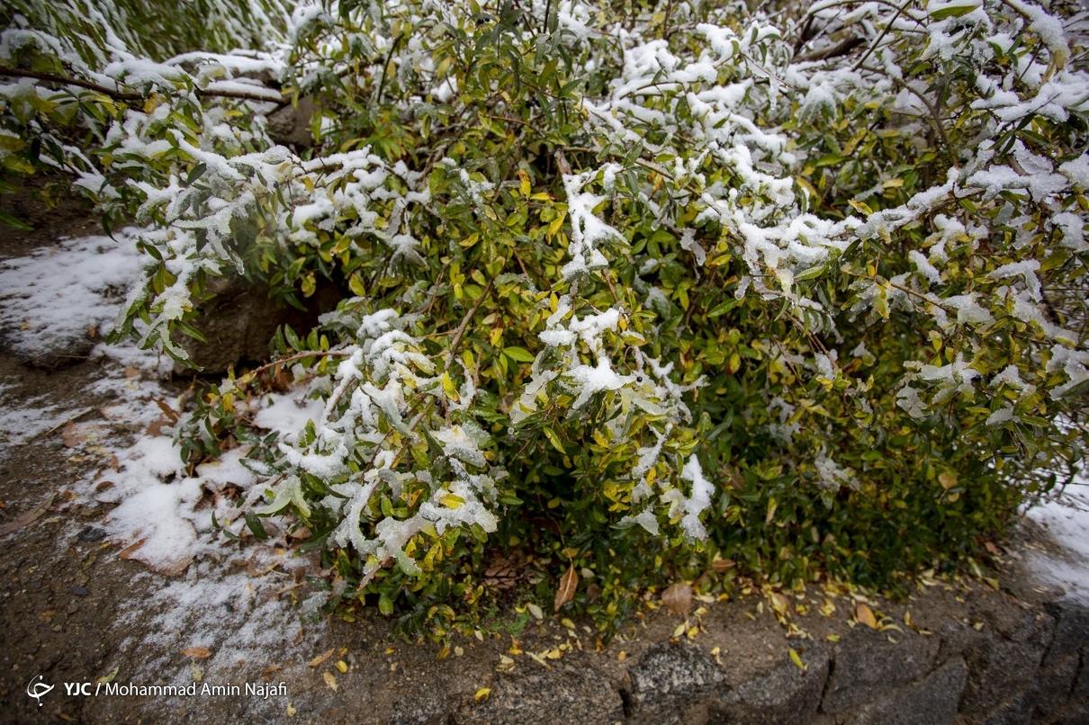 40013 - بارش اولین برف امسال در همدان+عکس