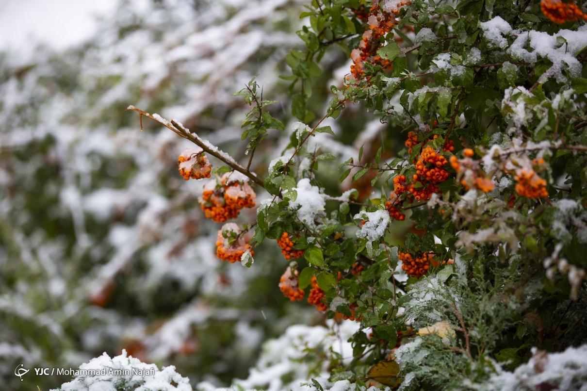 40016 - بارش اولین برف امسال در همدان+عکس