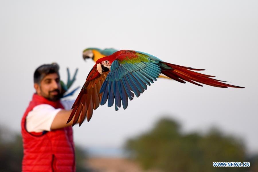 493f1a4a 18a6 4875 9f2e 80b5f5dcb772 - ببینید چه طور طوطی ها را آموزش می دهند! + عکس