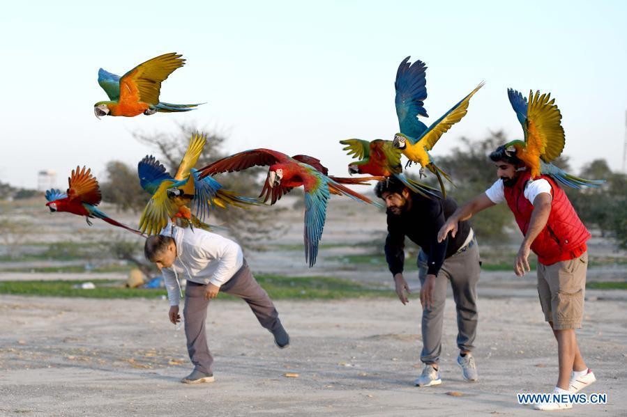 6c727114 11ce 4245 86ca 5e139d1c8cb2 - ببینید چه طور طوطی ها را آموزش می دهند! + عکس