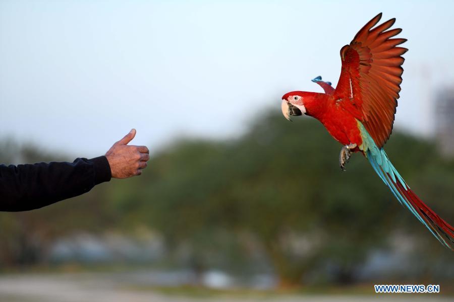 6ca8c311 405e 4da1 9763 76c40184ead7 - ببینید چه طور طوطی ها را آموزش می دهند! + عکس