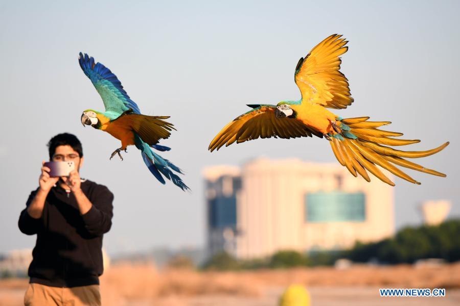 7597faa4 6ad1 4349 af40 2adaa1f16bed - ببینید چه طور طوطی ها را آموزش می دهند! + عکس