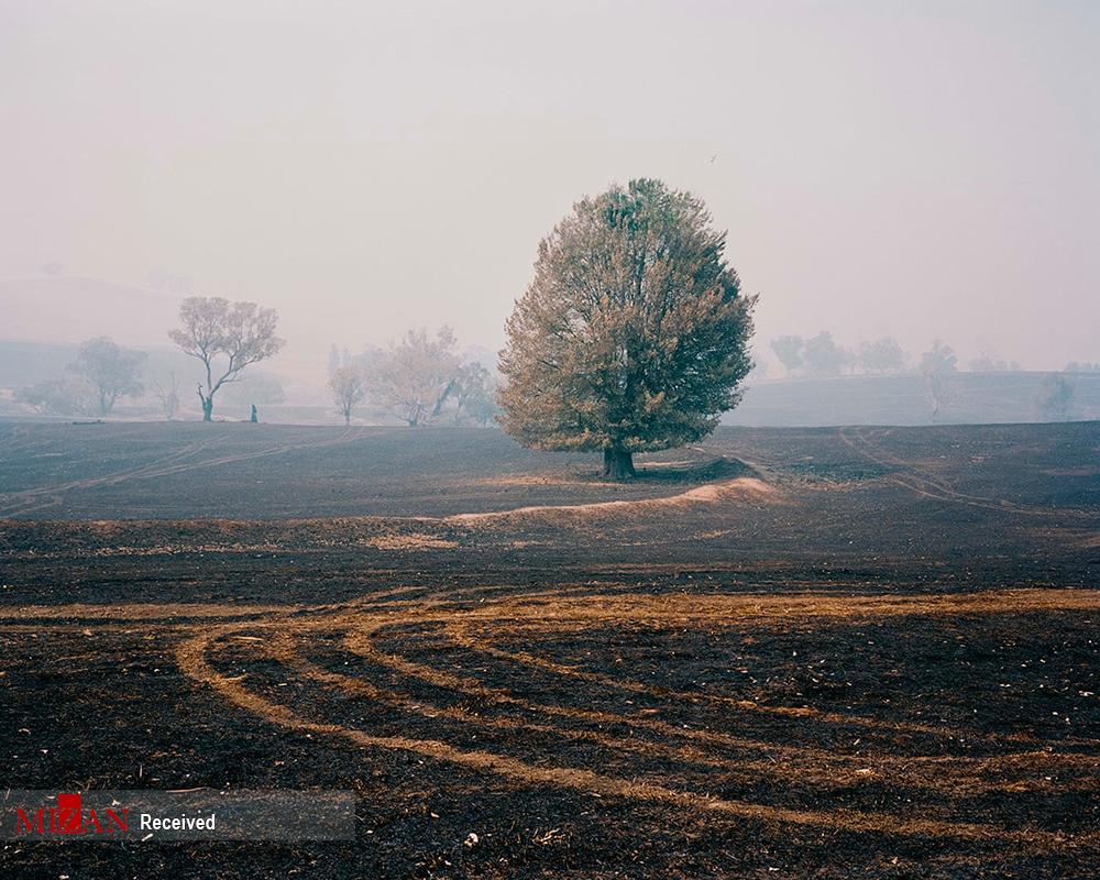 استرالیا پس از آتش سوزی + عکس