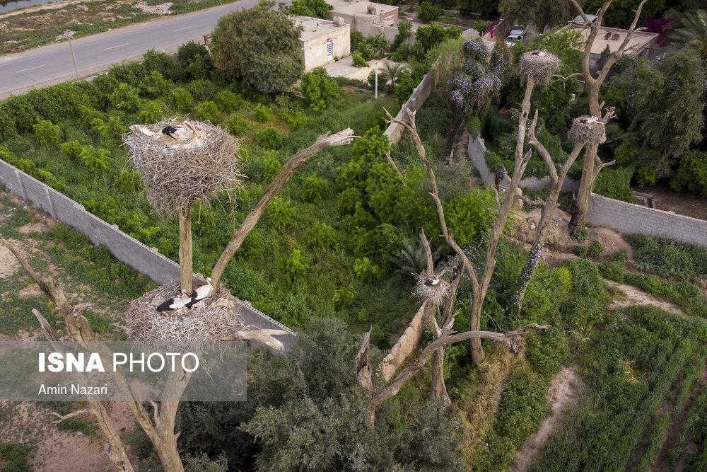 باغ لک لکهای دزفول + عکس